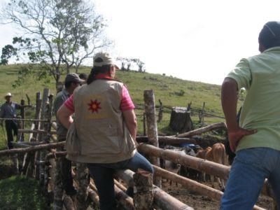 Proyecto de ganadería, La Volcana