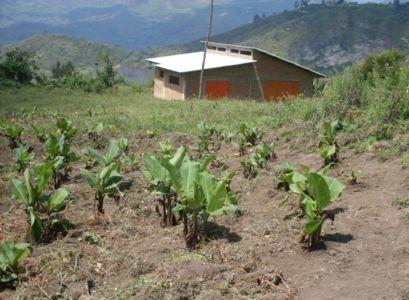 Planta de procesamiento de harina de achira