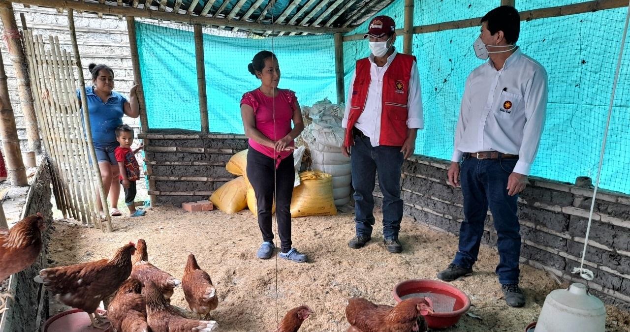 Proyecto productivo gallinas ponedoras